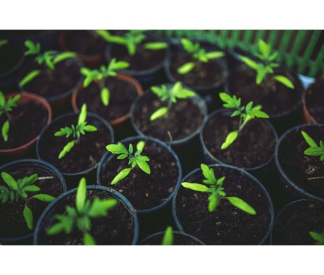 Growing Your Own Plants Indoors